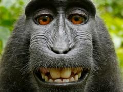 selfie-singe.jpg